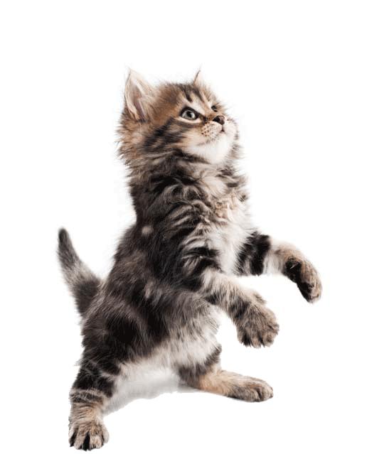 za.Katz Kitten slider | Meister Trading | The Cat Product Specialist