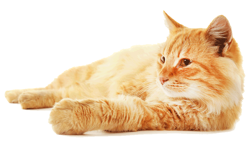 Paws 4 Africa Gingercat | Meister Trading | The Cat Product Specialist